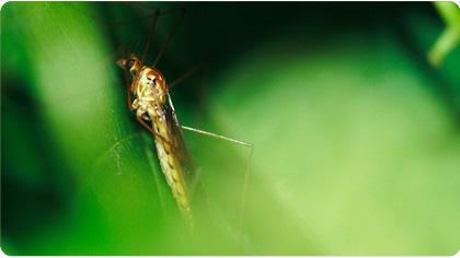 anti-moustique-bio_1.jpg