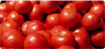 tomates-bio-legumes_1.jpg