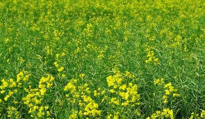 agriculture_bio.jpg