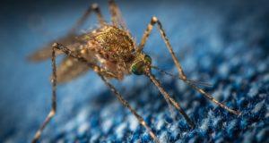 Repousser les moustiques