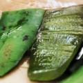 cultiver-aloe-vera1