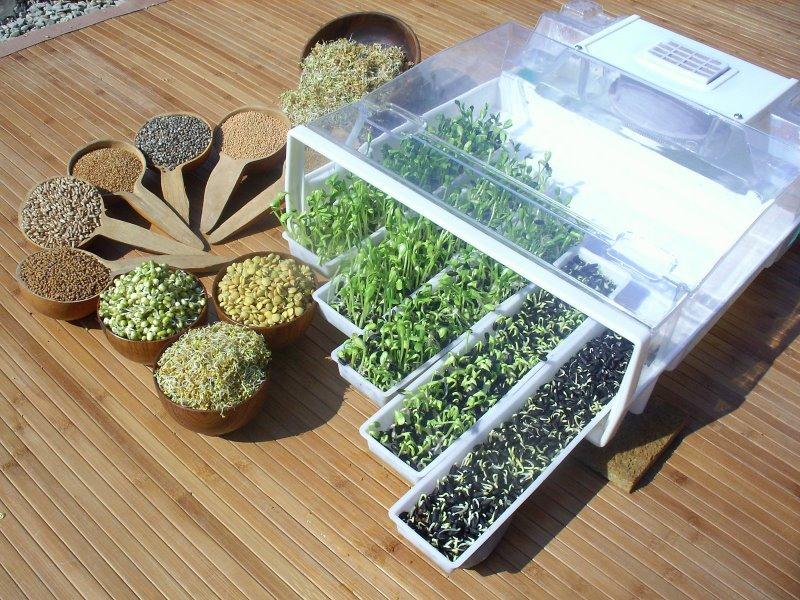germoir graines germ es 5 conseils pour le choisir. Black Bedroom Furniture Sets. Home Design Ideas