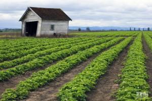 """Un exemple d'agriculture """"naturelle"""""""