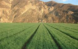 Les bienfaits de l'herbe d'orge avec le Green Magma chez Bien et Bio