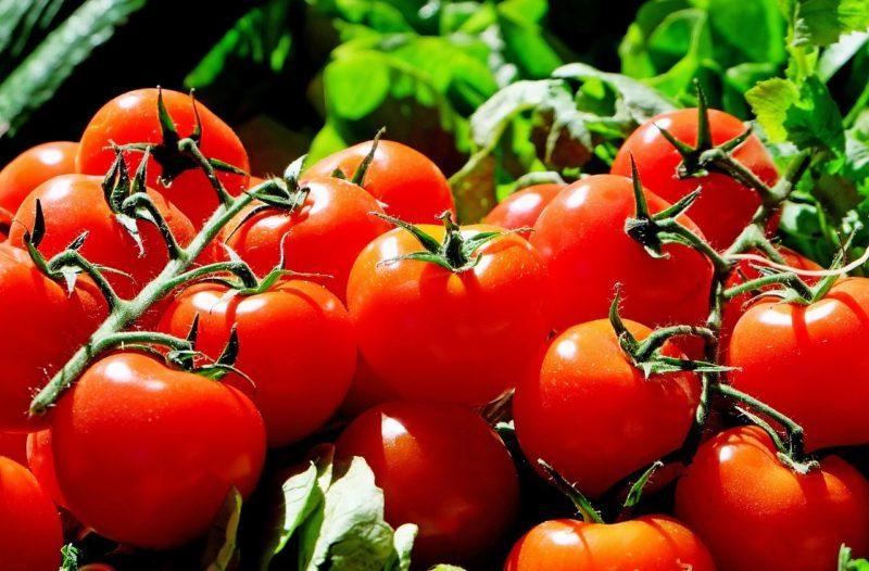 tomate biologique