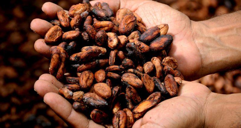 Cacao bio pour chocolat noir