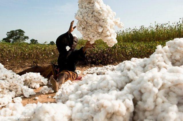 Coton équitable