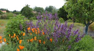graines, herbes et plantes médicinales