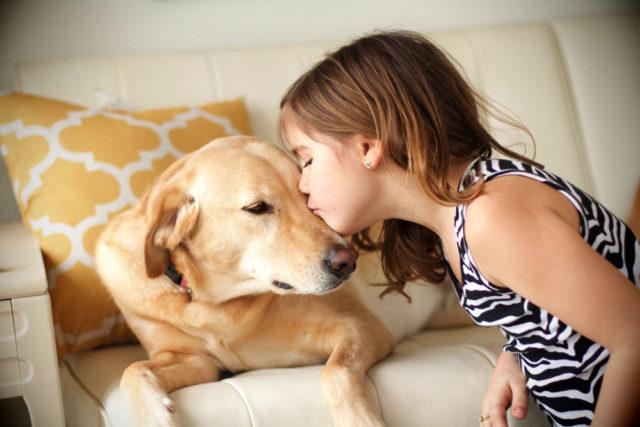 perro y bienestar