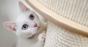bien-être chat