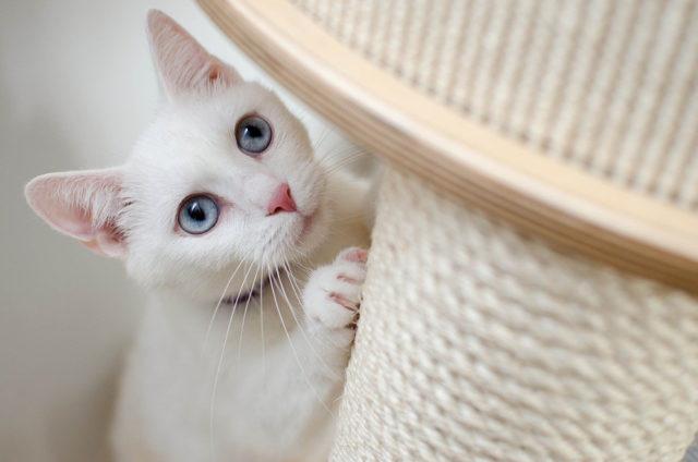 bienestar del gato