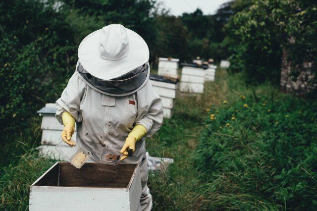 entretenir une ruche