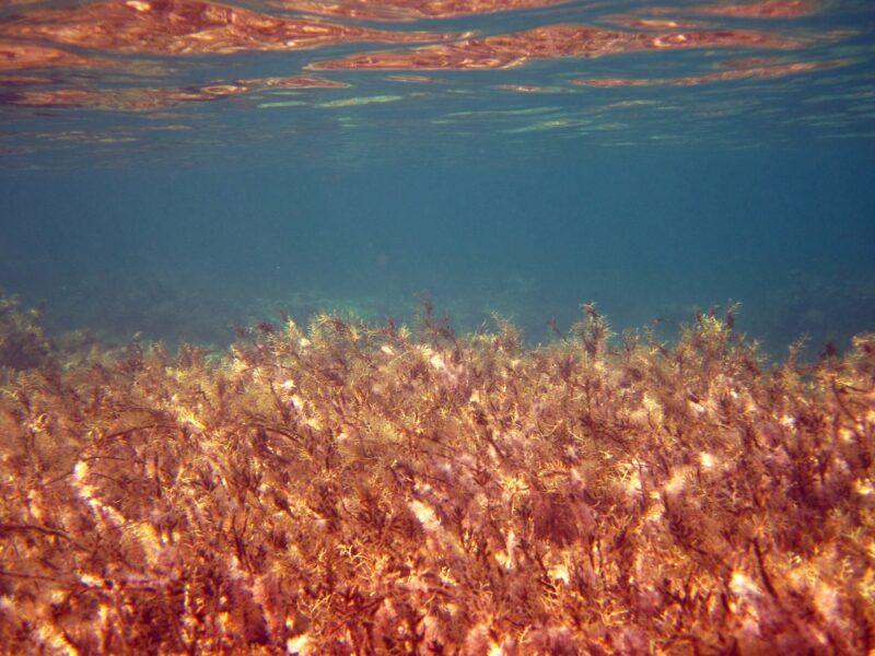différent algues